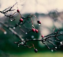 Winter Berries by Marie Carr
