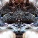 Cats by George Davidson