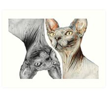 Sphynx Cut Art Print