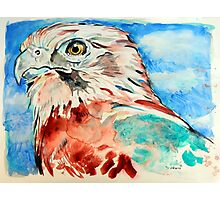 Brown Falcon Photographic Print
