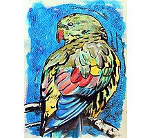 Regent Parrot Photographic Print