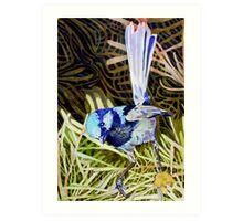Superb Fairy Wren 2 Art Print
