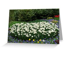 Ice Wings - White Narcissi in the Keukenhof Greeting Card