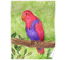 Red and Purple Tropical Parrot Poster