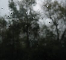 Rain and Trees by lorehess