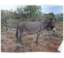 Wild Donkeys  Poster