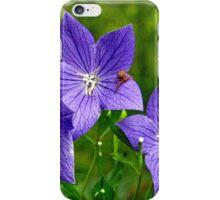 Campanula-Sempervivum iPhone Case/Skin
