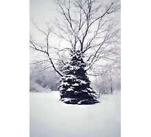 Winter's welcome Photographic Print