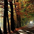 Jogging in the dreamland of autumn by jchanders