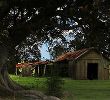 The Old Barn under the Fig Tree by myraj