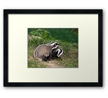 Badger Cubs playing Framed Print