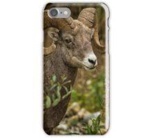 Ram Eating Fireweed cropped iPhone Case/Skin