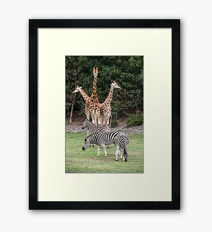 Animal Kingdom II Framed Print