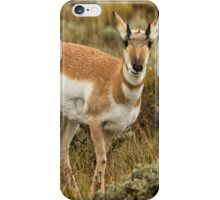 Pronghorn At Gros Ventre - Grand Tetons iPhone Case/Skin