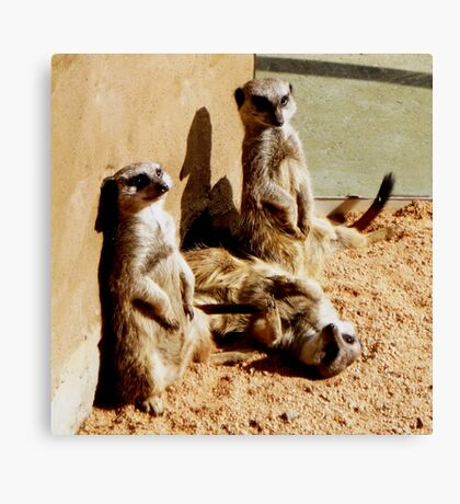 Meerkat Togetherness Canvas Print