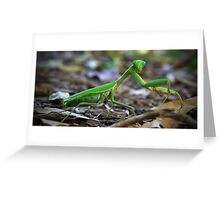 Green Preying Mantis Greeting Card