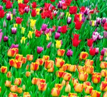 Tulips of field singing Sticker