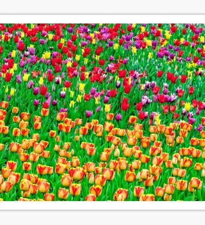Tulips of field singing Sticker