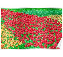 Beautiful Colorful Tulip Fields Poster