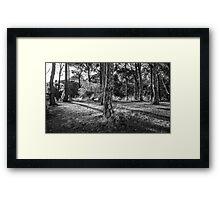 Forest Shadows Framed Print