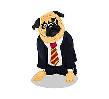 Pug in business suit Photographic Print
