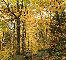 Fall colors over the Zealand Falls Trail, White Mountain National Forest, New Hampshire by Daniel Arthur Brown