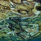 Reeflections at Sanaroa by Dr Andy Lewis