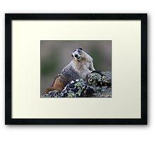 Alaska Marmot Portrait Framed Print