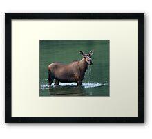 Moose & Emerald Pool Framed Print