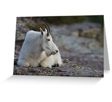 Mountain Goat Watching the Sunset Greeting Card