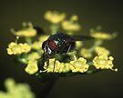 Fly & Pollen by WorldDesign