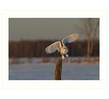 Snowy Owl taking off Art Print