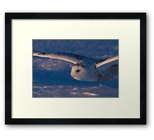 Snowy Owl flys at Sunset Framed Print
