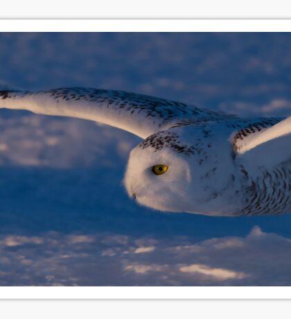 Snowy Owl flys at Sunset Sticker