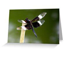 Widow Skimmer Dragonfly  Greeting Card