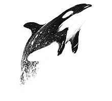 orca space Photographic Print