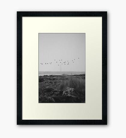 Cape Sable Birds Framed Print