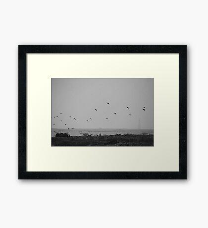 Cable Sable Island Birds Framed Print