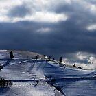 Beautiful Light..........Black Forest by Imi Koetz