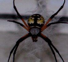 St. Andrews Cross Spider Sticker