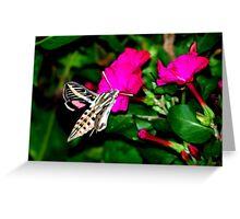 Moth Feeding on Pink Flowers Greeting Card