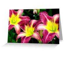 Daylilies After The Rain Greeting Card