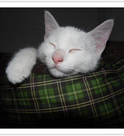 Sweet White Cat Sticker