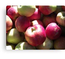 Harvest Apples Canvas Print