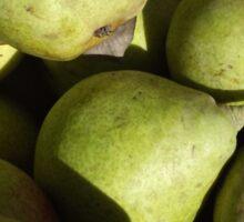 Green Pears Sticker