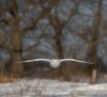 Glider - Snowy Owl Sticker