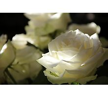 White roses Photographic Print
