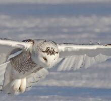 The Hunter - Snowy Owl Sticker