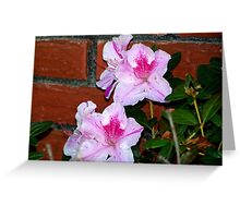 Azalea Blooming By The Brick Wall Greeting Card