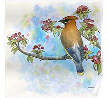 Cedar Waxwing Watercolor Poster
